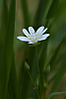 white-flower.jpg