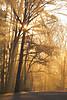 Morning_Mist.jpg